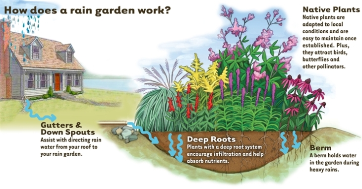 Rain gardens village of big bend wisconsin for Home rain garden design